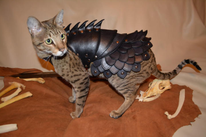 cat-battle-armor-02