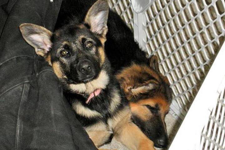 The Gosselins' New Puppies!