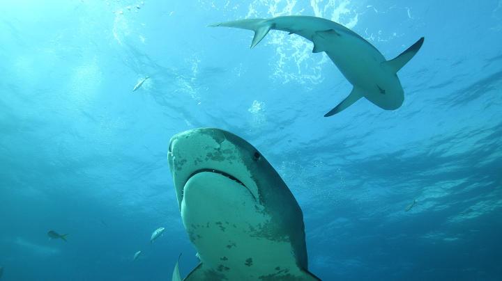 Секса акула фото онлайн в хорошем hd 1080 качестве фотоография