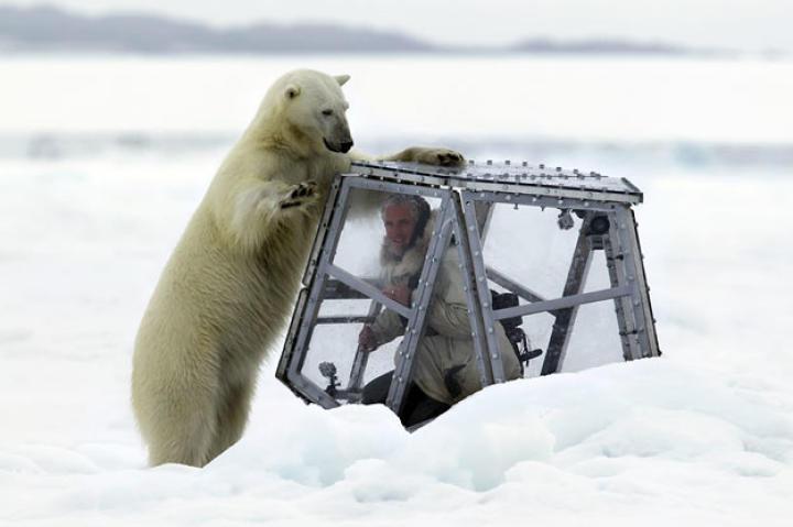 Polar Bear testing the Ice Cube while Gordon films..