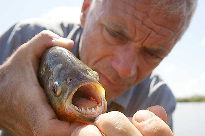 Jeremy Wade holds a river monster.