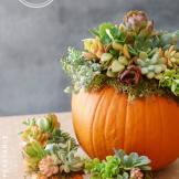 Pumpkin Succulent Simply Happenstance