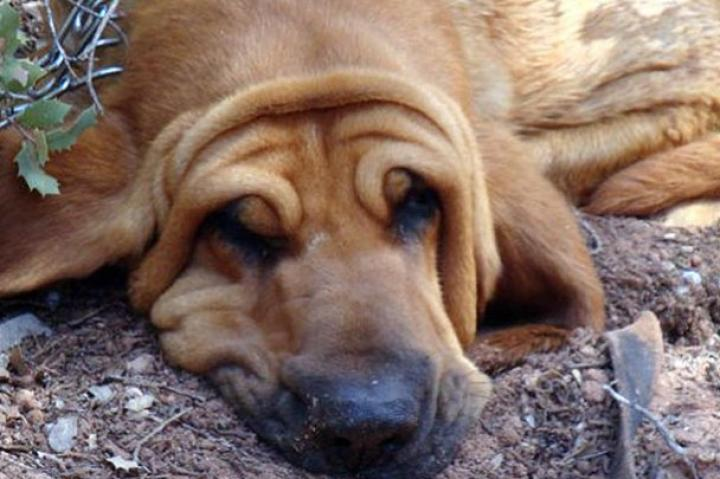 Dog Tired: Submitted by Jennifer G.-