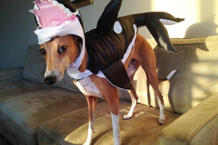 Who's the Cutest Halloween-Costume-Wearing Pet?