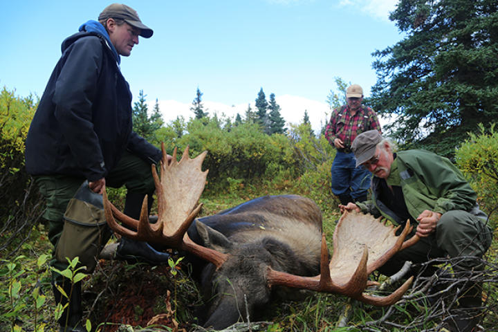 Atz Kilcher, Atz Lee Kilcher and Bruce take a look at the antlers on the moose that they just killed, which can show some of the moose's health history and also give an idea of its age.