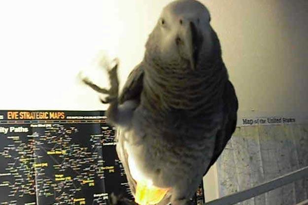 Mardi bad bird offers a slightly rude gesture.