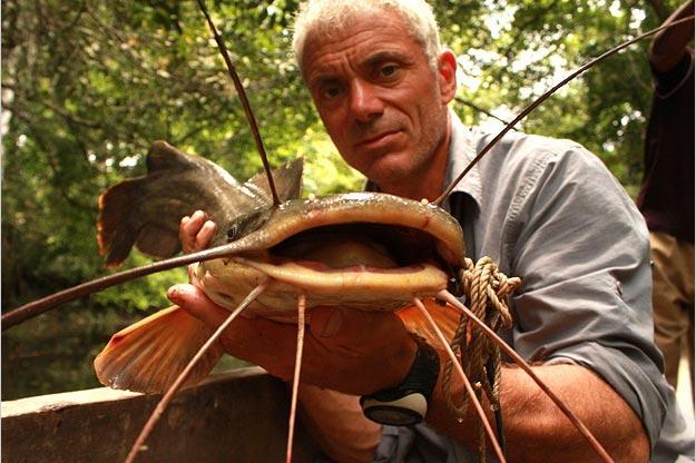 Kamba Catfish