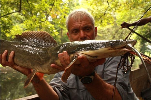 The Vundu catfish is one of the longest freshwater fish in southern Africa, if not the heaviest. Like a snakehead, it can survive for long periods of time out of water.