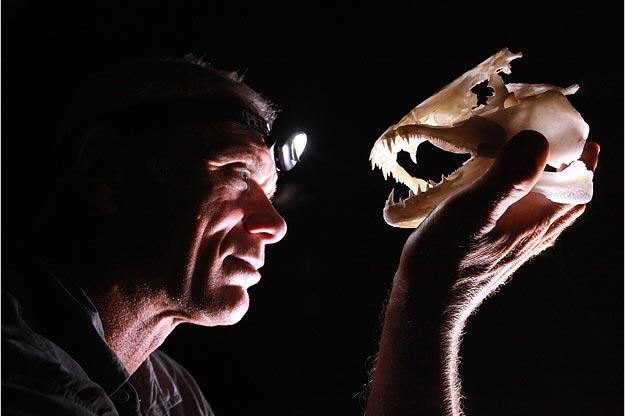 Jeremy Wade lights up the skull of a wolf fish with his headlamp. Some wolf fish are shy, while others are so aggressive that they will jump onto shore or into a canoe to attack their prey.