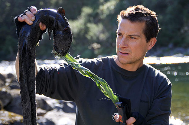 Bear Grylls holds up his dinner, an eel that he lured with a piece of whale carcass and then caught with flax, an ancient Maori fishing technique.