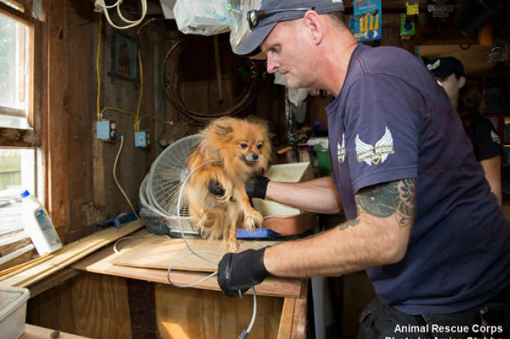ANIMAL RESCUE CORPS AND WAYNE COUNTY AUTHORITIES RESCUE MORE THAN 80 ANIMALS FROM ALLEGED PUPPY MILL