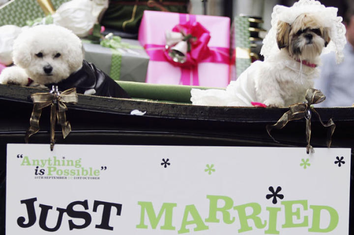 Not to be outdone with all the Royal Wedding fanfare, Animal Planet would like to offer this wedding gift to Prince William and Princess Kate -- the 10 Cutest Animal Wedding Photos. We hope that you enjoy them, too. London's Harrods department store hosted its first dog wedding in 2006 between Muffin, a Shih Tzu, and Timmy, a Bichon Frise, to promote their 'Anything is Possible' season.