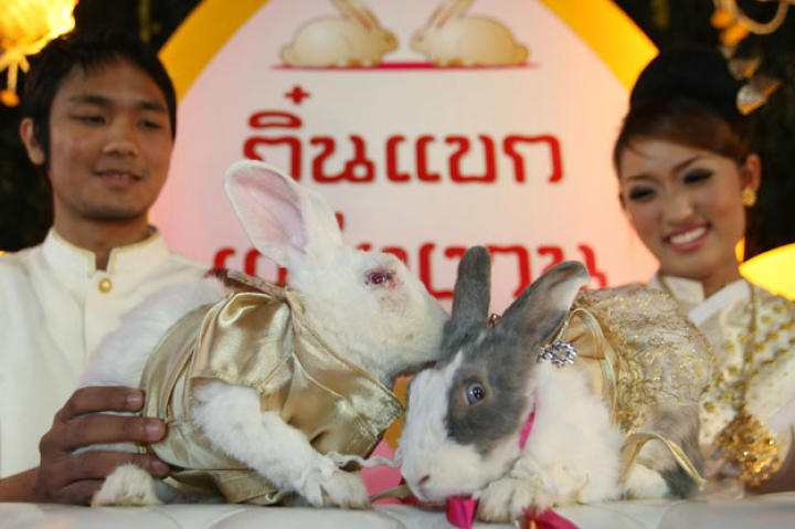 A pair of rabbits wed in a traditional Thai ceremony at an animal park on Chiang, Mai, northern Thailand on Valentine's Day 2011. The event may have doubles as a Chinese New Year celebration as 2011 marked the Year of the Rabbit.