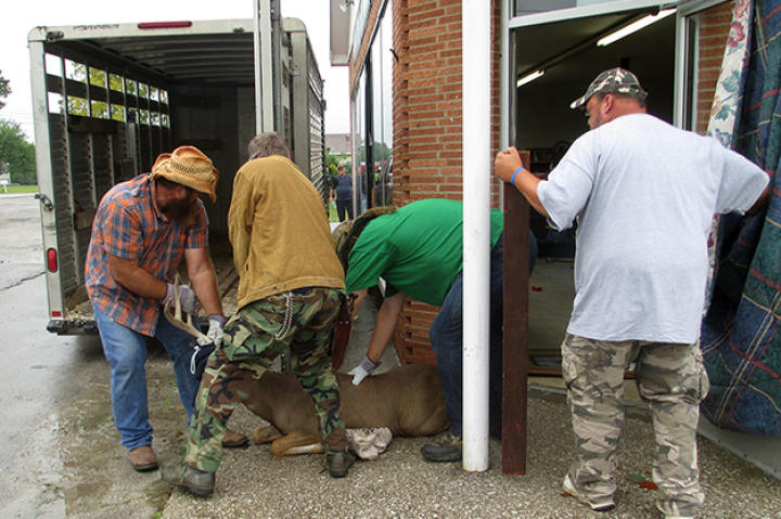 Team Turtle manages to catch Chuck the Buck and they load him into the truck.