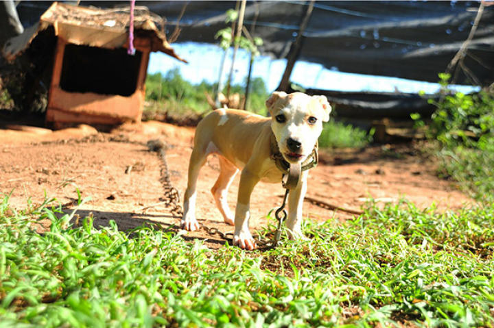 Over 360 dogs were rescued in multi-state raid, one of the largest takedowns of a dog fighting ring in U.S. history.