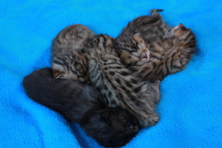 Is there anything cuter than a pile of napping kittens?