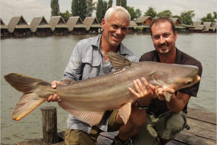 While fishing for the giant freshwater stingray, Jeremy Wade captures another monster: the Mekong giant catfish. Next to the giant freshwater stingray, the Mekong giant catfish is considered the largest freshwater fish in the world. Capable of growing to 10.5 feet in length and 660 pounds in weight, this catch is only one-tenth the size of what this species can reach.