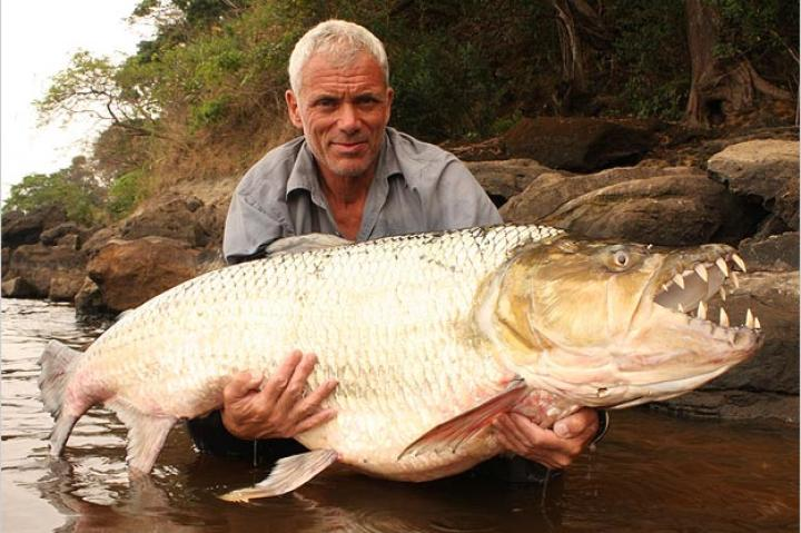 The goliath tigerfish lives in one of the most remote regions of the world: the Congo River in the heart of Central Africa, where very few outsiders go. The difficulty in reaching its habitat only adds to the difficulty of the catch.
