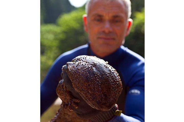 """Japanese giant salamanders have what is called """"nocturnal super senses."""" They sport sensory cells on their skin to help them detect vibrations in their environment in the water."""