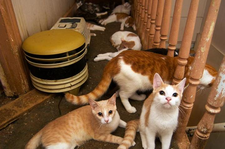 A group of Marie's cats lounge in the hallway of Marie's home.