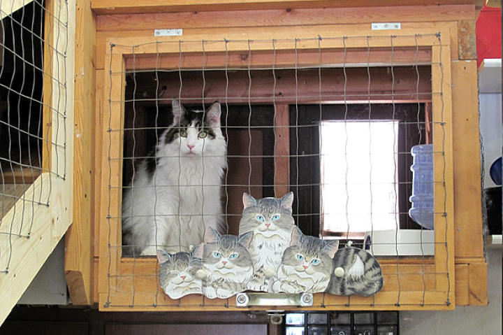 One of the Fur Kids cats inside an enclosure.