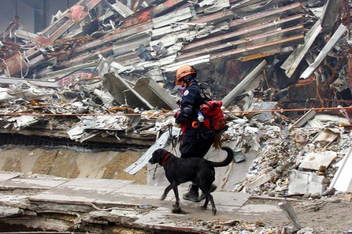 Animals have fought side by side with soldiers since before the Roman Empire. And they've offered more than just protection. Animals of all kinds have shown fearless dedication to helping the people who protect our country as well as provided them with comfort and hope during times of real adversity. For instance, Appollo, a dog specializing in search and rescue, helped firefighters locate missing people during the Sept. 11 terrorist attacks in New York. While the ways in which animals have helped our men in uniform are infinite, here are a few of their stories.