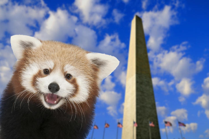 Rusty arrived at the Zoo in April, so he really just wanted to get out and be a tourist in his own, new city. Check out the Washington Monument!