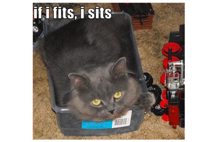 fits-sits-cat-01-625x450