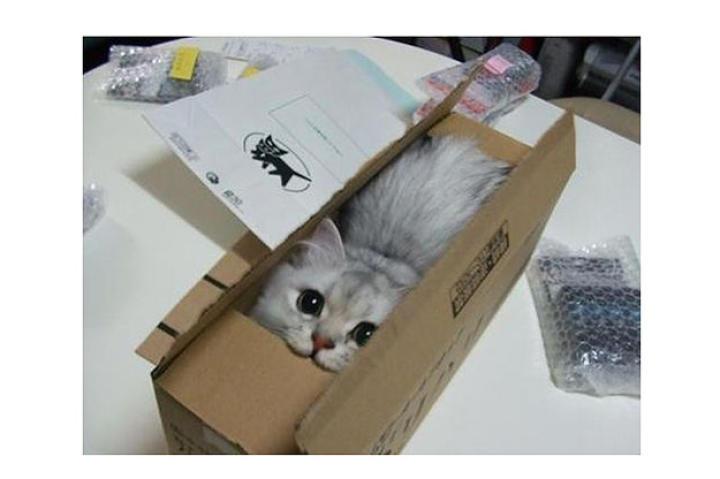 fits-sits-cat-04-625x450