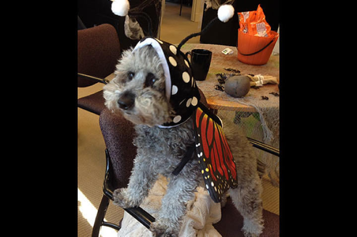 halloween-webster-social-butterfly
