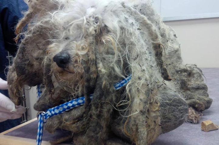 shrek-dog-rescue-01-625x450