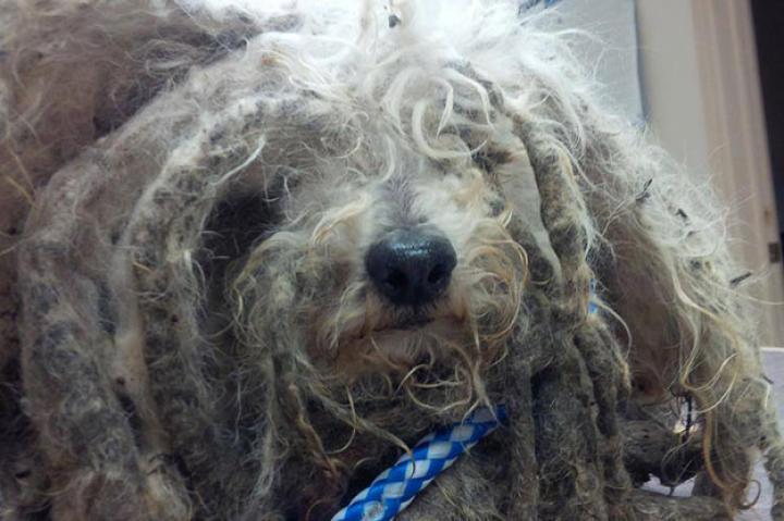 shrek-dog-rescue-02-625x450