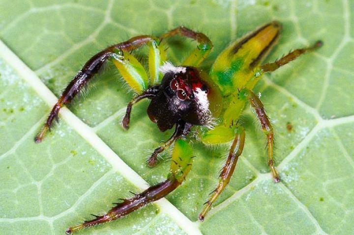 Monster Bug War