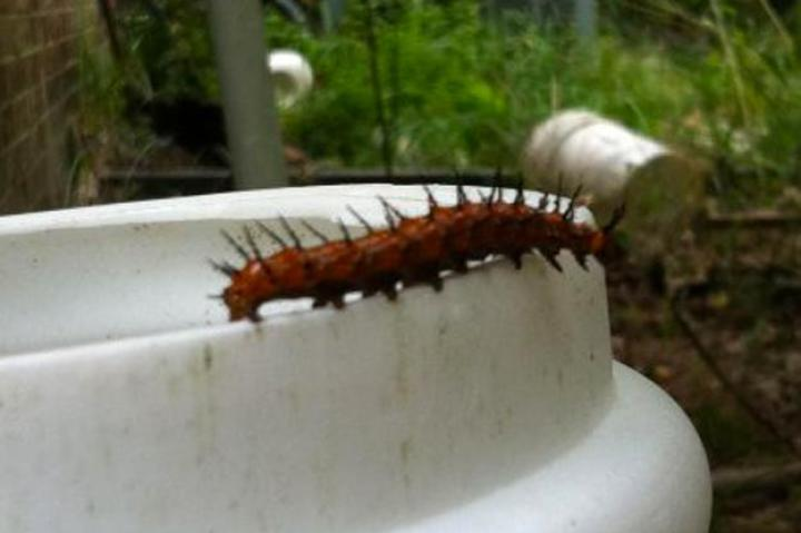 Spotted by Sherrib Grand Bay, Alabama, United States
