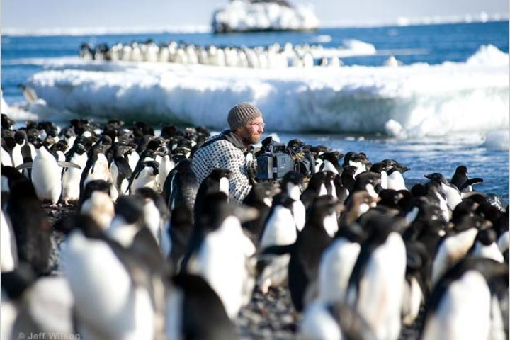 Cameraman Mark Smith among the Adélie penguins of Cape Crozier.