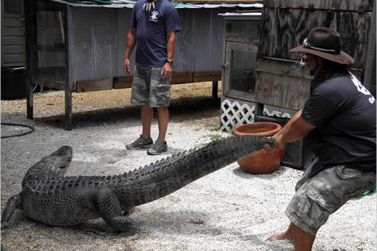 As seen on Gator Boys, only on Animal Planet.