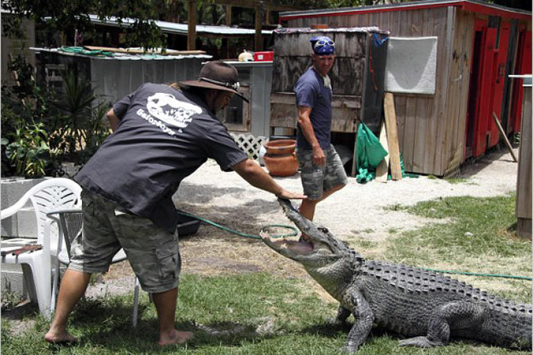 Gator boys animal planet for Pool show on animal planet