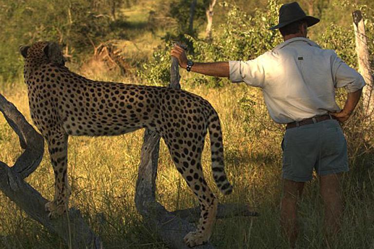 Kim Wolhuter and a cheetah