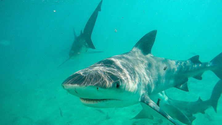 Shark Week | Discovery