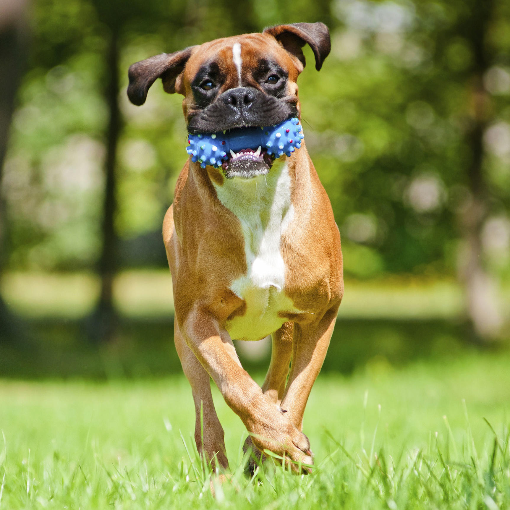 Dog Training and Fitness