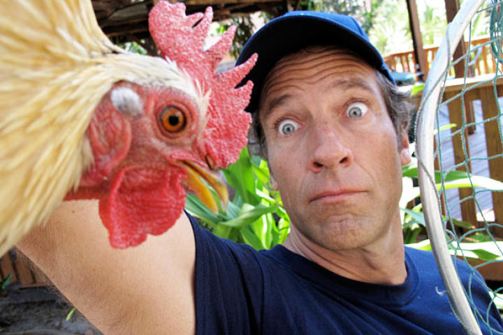 Mike Rowe poses for cameraman Troy Paff during a break from wrangling the stray chickens that roam the neighborhoods of Miami. (Speaking of Miami's wild chickens, who knew?)