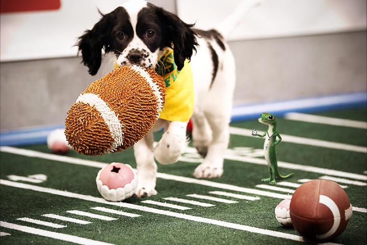 dogrunfootball