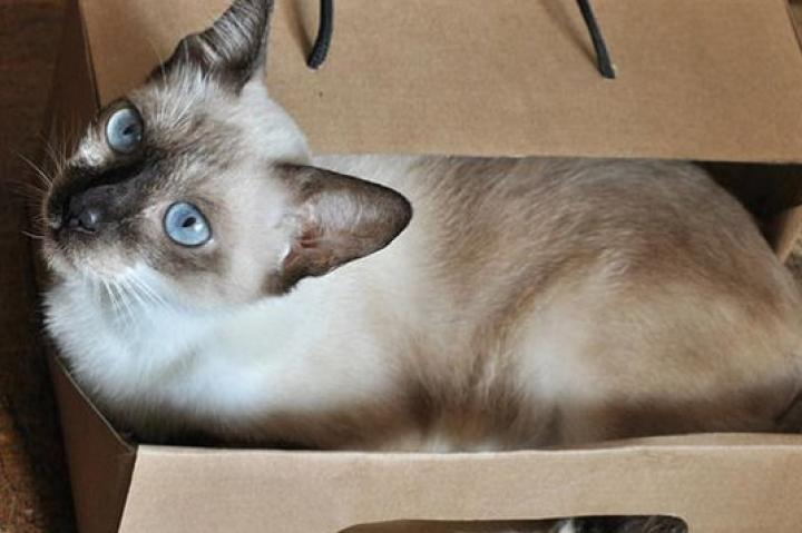 Cat Box: Submitted by Alethea B.-