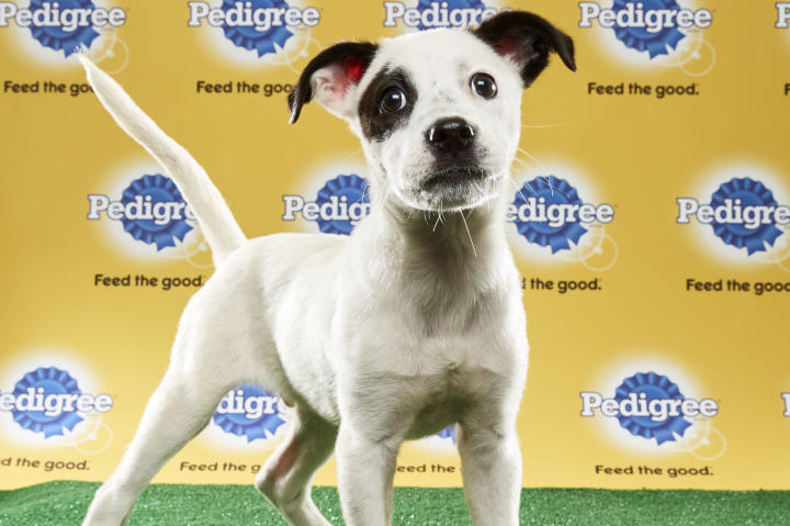 Basher Junior, Puppy Bowl XIII