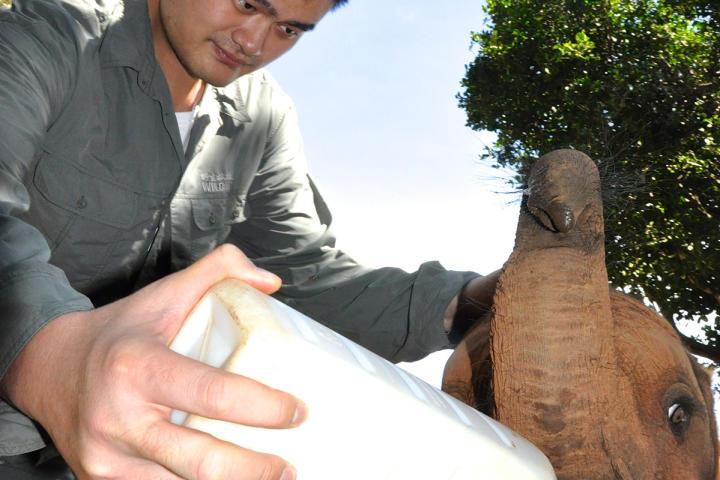 yao-ming-elephants-2