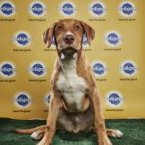 Alvin - Puppy Bowl XIV