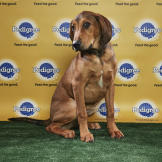 Barry - Puppy Bowl XIV