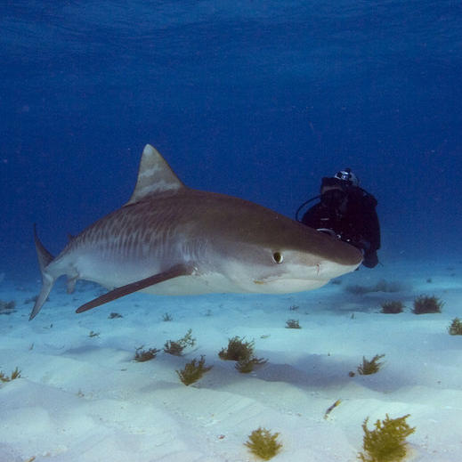 Shark Rebellion
