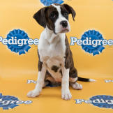 Aaron-starting-line-up-PuppyBowl-11-FLUFF