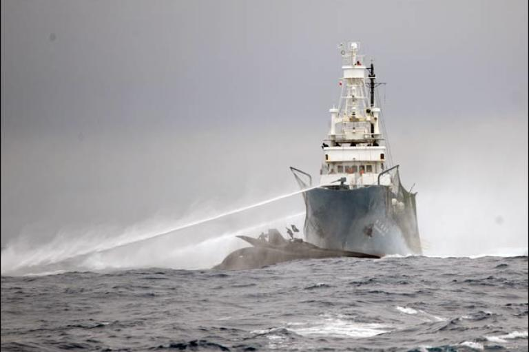 The bow of a Sea Shepherd anti-whaling boat, the Ady Gil,  was broken off when a Japanese vessel collided with the much smaller six-person craft in the waters near Antarctica on Jan. 6. The crew members on the 78-foot carbon-fiber and Kevlar trimaran were transferred to another nearby Sea Shepherd vessel, but the $1.5 million Ady Gil was unsalvageable and left sinking in the Southern Ocean. The Japanese whaler, Shonan Maru No. 2, had no apparent damage.<br /><br /> Whalers and anti-whaling activists frequently clash in the cold Antarctic waters as the Sea Shepherd Conservation Society sends boats to disrupt the hunts. Ropes to tangle propellers and rudders, stink bombs, sound equipment and other tactics are used by the anti-whaling activists to interfere with the whaling.
